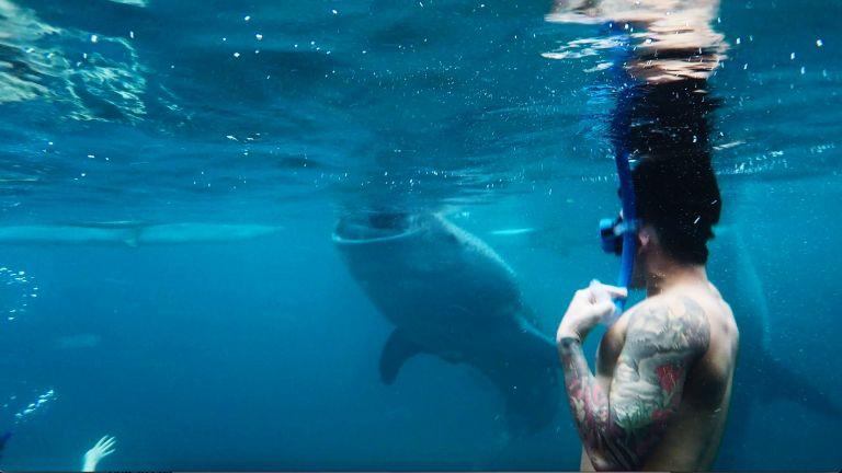 Whalesharks 1