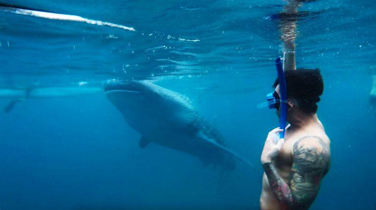 Whalesharks 2