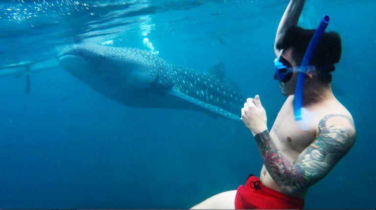 Whalesharks 3